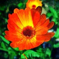 Цветик.. :: Жанна Егорова