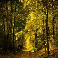 Осень в запущенном парке... :: Копыткина Юлия