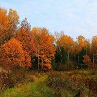 Золотая осень :: Тамара