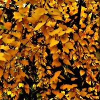 Янтарная осень :: Григорий Кучушев