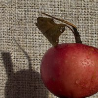 Про яблочко :: валерия