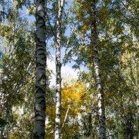 В парке осенью :: Владимир Кроливец