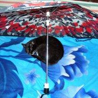 А под зонтом спокойней... :: Александр Резуненко