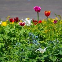 Немного весны. :: Геннадий Александрович
