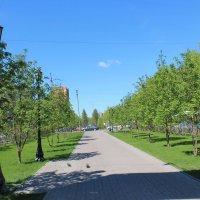 Красный проспект. :: Олег Афанасьевич Сергеев