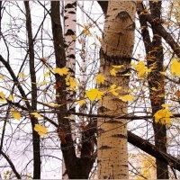 Осенние ветвесплетения :: Татьяна Ломтева