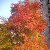 Осень к дому подступила :: Tarka