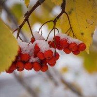Первый снег )) :: Наталия Тугаринова