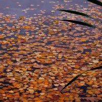 А в холодной воде лист осенний дрожит :: Татьяна Ломтева