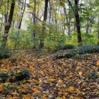 Осень в лесу. :: *MIRA* **