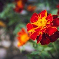 Цветок. :: Альбина Дорохина