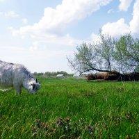 Деревенский пейзаж :: Виктория Селиванова