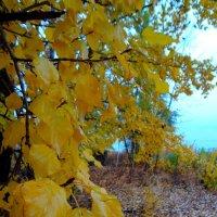 Поздняя осень. :: Ирина