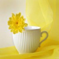 Желтая хризантема в белой чашке :: Галина Galyazlatotsvet