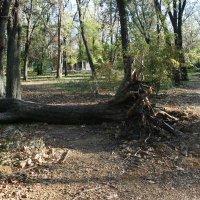парк после бури :: александр