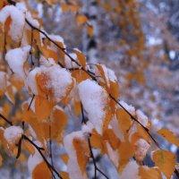 Зачем берёзе белой белый снег :: Татьяна Ломтева