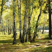 Лес в солнечном свете . :: Мила Бовкун