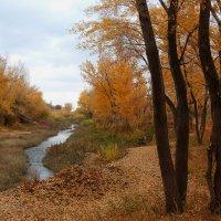 Осенний пейзаж :: Dr. Olver  ( ОлегЪ )
