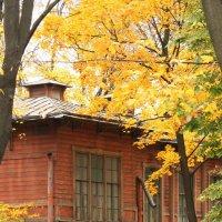 Уголок деревянного Петербурга :: Вера Моисеева