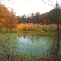 Осеннее болото :: Marina