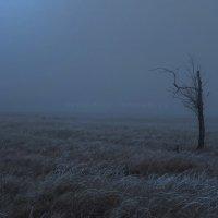 туман :: Юрий Винницкий