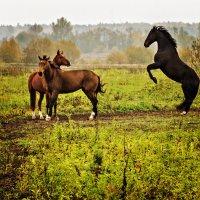 Про лошадок :: Владимир Самсонов