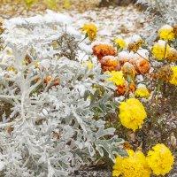 Цветы под первым снегом :: Андрей Мердишев
