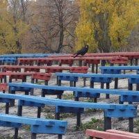 черная птица :: Анастасия Вышемирская