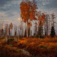 Свет берёзовый... :: Roman Lunin