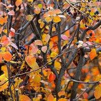 Терпкие ягоды осени. :: A. SMIRNOV