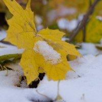 первый снег :: Светлана ~~~