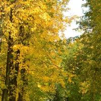 только осенью такие краски :: дмитрий глебов