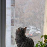 а за окном первый снег :: Виктория Владимировна