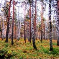 Осень в лесу. :: Мила Бовкун