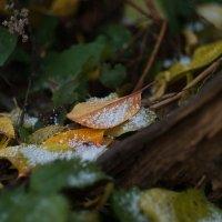 ...первый снег... :: Андрей Гр