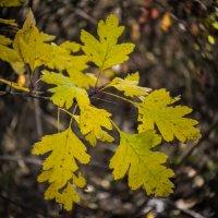 Осень :: Марина Захарова