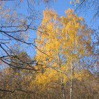 А из нашего окошка видно осени немножко :: Андрей Ягодко