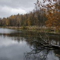 Осенний лес :: Максим Рублев