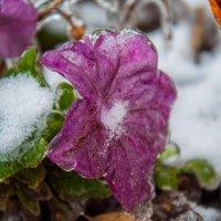 Холодная красота :: Светлана