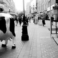 Арбат к вечерней дойке :: Григорий Кучушев