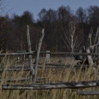 старая ограда :: Роман Романов