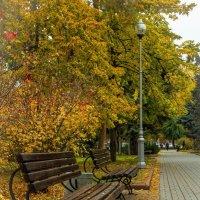 Золотая осень :: Наталья Васильева