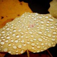 дождливое 2 :: BioJ .