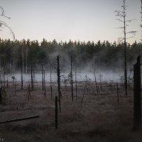 лес, туман, мороз :: Сергей Тетерев
