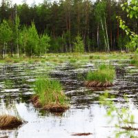 Живописное болото. :: Анастасия Самигуллина