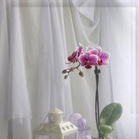 Ожидание зимы :: Татьяна Хромова
