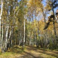 В осеннем лесу. :: Мила Бовкун