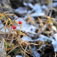 В осеннем лесу :: Андрей Куприянов