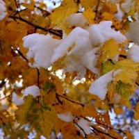 Листья и снег :: galina tihonova