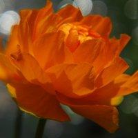 Была весна... :: Svetlana27